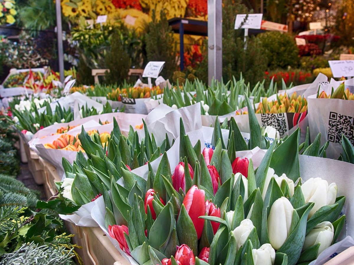 tulipanes mercado de flores de amsterdam