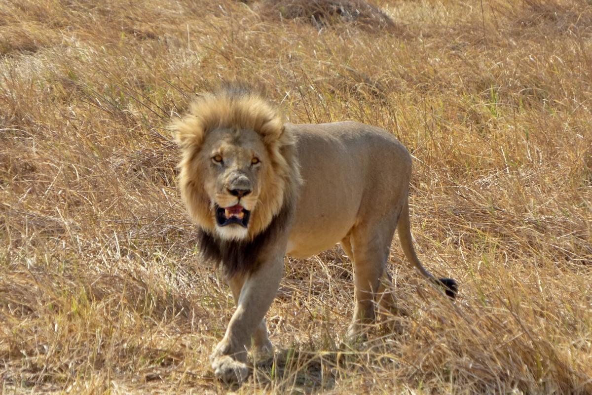 leon macho botswana