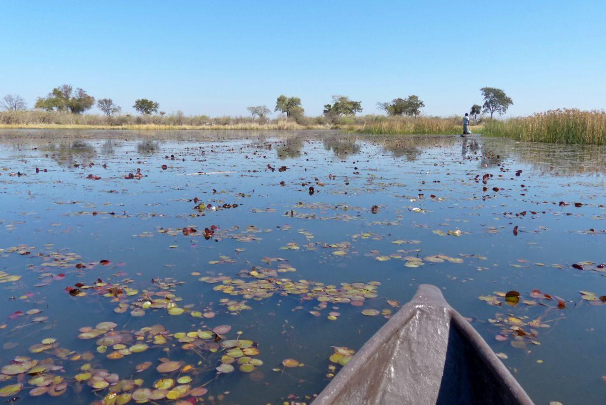 paseo en mokoro delta del okavango water lilies