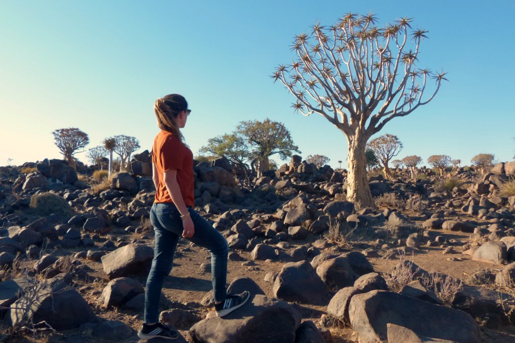 bosque de quivertree en namibia