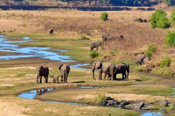 elefantes en el parque nacional kruger en sudafrica